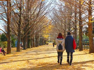 木の隣に歩く男の写真・画像素材[881066]
