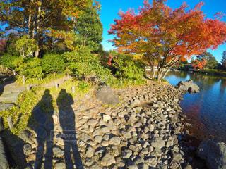 木の隣に立っている人の写真・画像素材[881103]