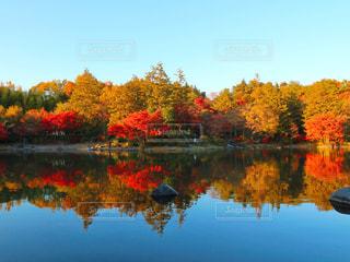 木々 に囲まれた水の体の写真・画像素材[881144]