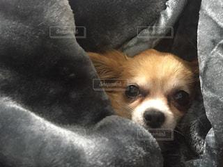 犬の写真・画像素材[287306]