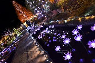 光の世界のお花畑 - No.892199
