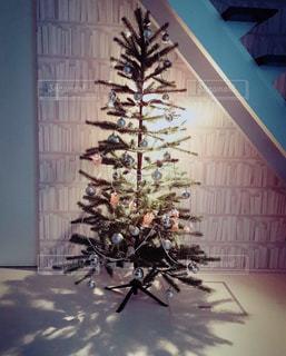 treeの写真・画像素材[271161]