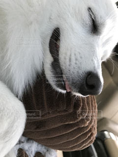 犬の写真・画像素材[482879]