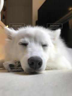 犬の写真・画像素材[482883]
