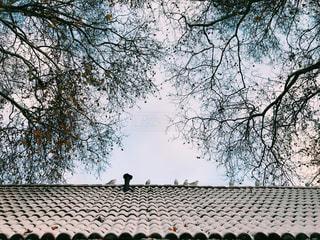 冬空と鳥の写真・画像素材[913164]