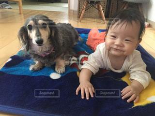 犬,女の子,赤ちゃん,ダックス
