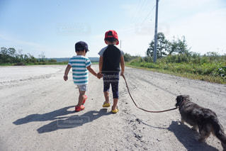犬,夏,ダックス,男の子,兄弟,お散歩,3才,2才,10才