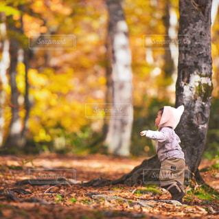迷いの森の写真・画像素材[872125]