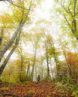 山散歩の写真・画像素材[872126]