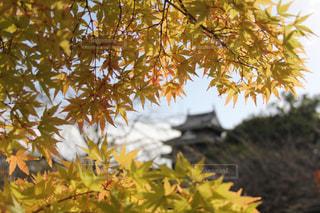 紅葉と城 - No.854293