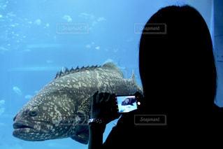 巨大魚の写真・画像素材[1431343]