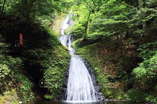 阿寺の七滝の写真・画像素材[1448127]