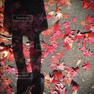 紅葉と影の写真・画像素材[1611730]