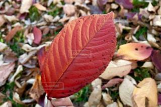 秋🍂の写真・画像素材[1623458]