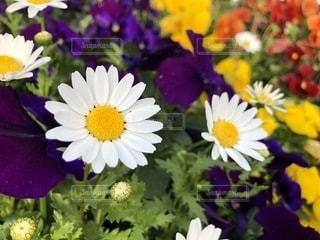 花の写真・画像素材[2043397]