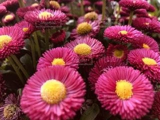 花の写真・画像素材[2043424]