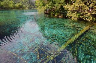 近くに池のアップの写真・画像素材[808727]
