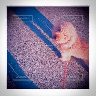 犬のスクリーン ショットの写真・画像素材[1211962]