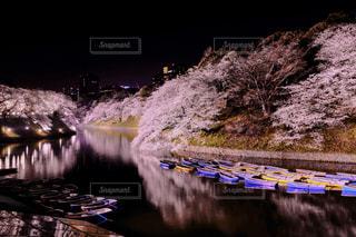 風景,春,桜,夜景,屋外,ボート,ライトアップ,東京都,リフレクション,千鳥ヶ淵