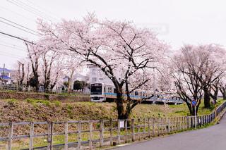 風景,春,桜,屋外,電車,線路,神奈川県,小田急線,相武台前駅,座間駅