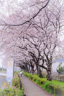 風景,春,桜,屋外,バス停,神奈川県,神奈中バス,相模原市,相武台下駅