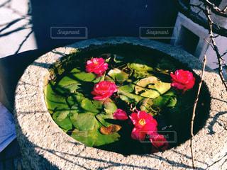 花の写真・画像素材[299889]