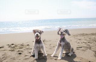 ビーチに立っている犬の写真・画像素材[800216]