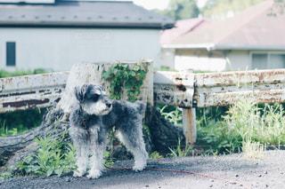 建物の前に立っている犬の写真・画像素材[1188431]