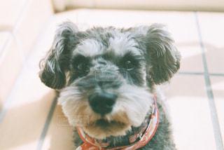 近くに犬のアップの写真・画像素材[1242139]
