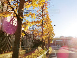 秋色の写真・画像素材[879672]