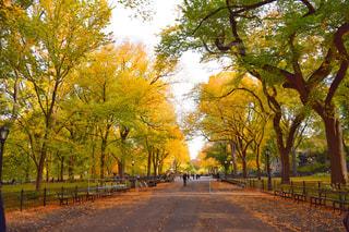 ニューヨーク・セントラルパークの写真・画像素材[1000217]