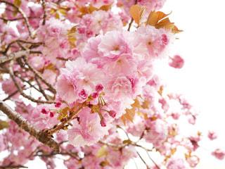 近くの花のアップの写真・画像素材[1121985]