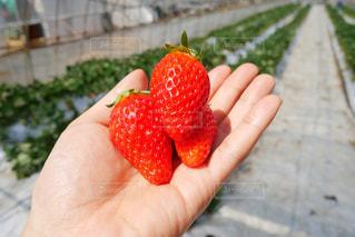 果物を持っている手の写真・画像素材[1147368]