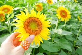 黄色の花の写真・画像素材[1392541]