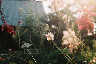近くの花のアップ - No.719557