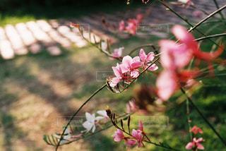 近くの花のアップ - No.719567
