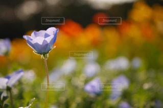 近くの花のアップ - No.781756
