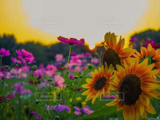 近くの花のアップ - No.798866