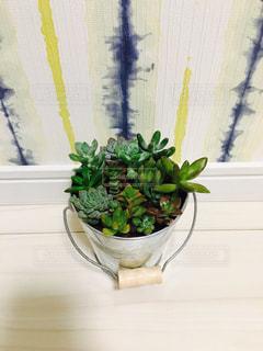 植物の花の花瓶 - No.820543