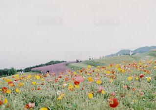 filmで撮った景色の写真・画像素材[2372445]