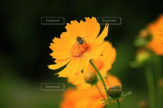 花の写真・画像素材[602425]