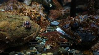 魚の写真・画像素材[491073]
