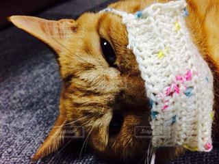 猫の写真・画像素材[310947]