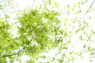 春の写真・画像素材[455726]