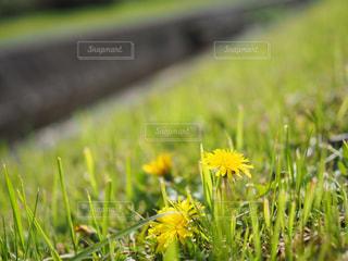 春 - No.455728