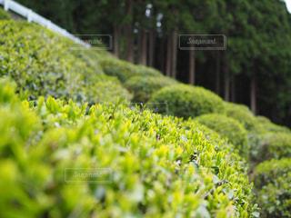 植物の写真・画像素材[460509]