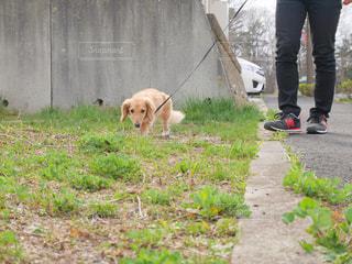 犬 - No.443435
