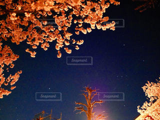 空,春,桜,夜,ピンク,雲,夜桜,お花見,仙台,宮城,lumixgf7,2018年4月