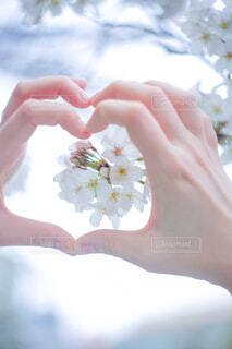 桜とハートの写真・画像素材[4284384]