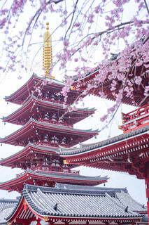 五重塔と桜の写真・画像素材[4284395]